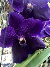 Vanda Roberts Delight Ink Blue