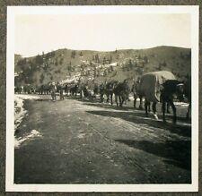 K.u.K CHASSEURS ALPINS canons Batterie AUTRICHE HONGRIE ITALIE Balkans Photo (l4835