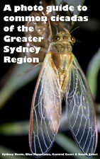 A photo guide to the common cicadas of the Greater Sydney Region -nature ecology