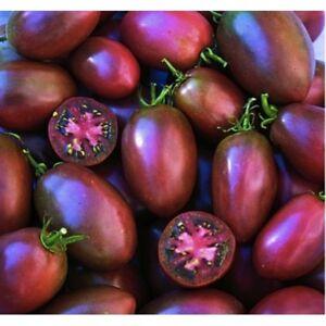 TOMATO – PURPLE UKRAINE – 50 SEEDS  ORGANIC / NON GMO