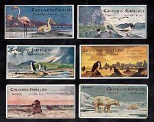 Beach Water Birds & Animals German Gartmann Card Set 1900s Penguin Bear Pelican
