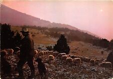 BR25693 Berger et son troupeau au coucher du soleil sheep mouton 2 scans  france
