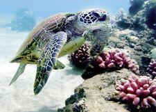 4 Greeting Cards Hawaiian Blank Bebe Honu Turtle by Monica & Michael Sweet