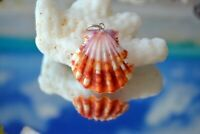 Colorful Hawaiian Sunrise Shell (Pecten Langfordi) + South Seas Pearl & SS Chain