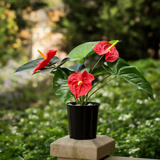 Red Artificial Fake Flamingo Anthurium Lily Pot Plant for Home Office Decor