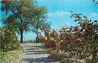 Valparaiso Indiana~Strongbow Turkey Farm And Inn~Turkey Pies~Hwy 30~1950's PC