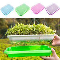 Seed Sprouter Tray Double Layer Soilless Culture Bean Hydroponic Nursery Implant