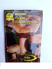 Mycielium Dry Seed 20 G agario deliciosus ZAFFERANO Latte Tappo Rosso Fungo di Pino