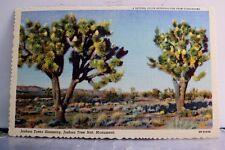 California CA Joshua Tree National Monument Trees Blooming Postcard Old Vintage