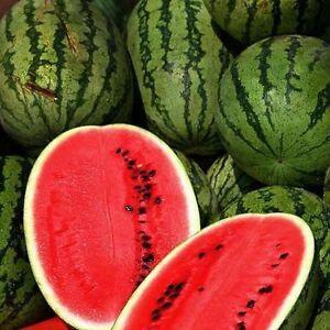 Watermelon Seeds, Citrullus Lanatus, All Sweet, NON-GMO, Heirloom, Variety Sizes