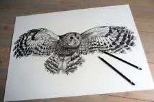 Original graphite pencil drawing, tawny owl in flight, large, art