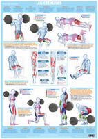 Leg Muscles Weight Training Chart Body Building Poster Gym Fitness Exercise