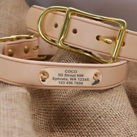 Personalised Leather Dog Collars Pet Name ID Collar Tags Engraved Gold Buckle