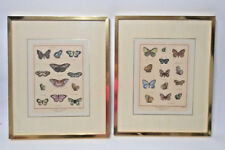 Historie Naturelle Papillons d' Europa Hand Colored Prints Framed, Free Shipping