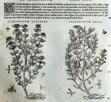 Atractyle Cardo Clinopodium Botánica Matthioli Mattioli Matthiole Dioscorides