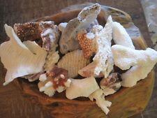 Natural Reef White Coral Pieces - Coral Specimen - Seashells - Coastal Decor