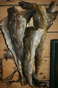"""Traditionally tanned natural fish skins (UNSOFTENED, STIFF) skrei cod 20"""" length"""