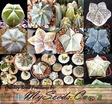 (10) Astrophytum Hybrids Cactus Mix Seeds - Sea Urchin Cactus - Combined S&H