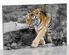 Multi-Colour Contemporary Art Animals Art Prints