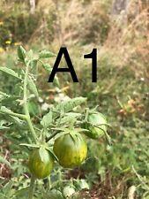 20 Graine Tomate cerise