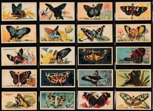 Player (John) - 'Butterflies (Girls)' - Complete Set