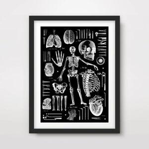 DARK VINTAGE MEDICAL BLACK ART PRINT Poster Decor Wall Chart Tattoo Illustration