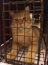 HELP TNR SPAY NEUTER FEED FERAL CATS NONPROFIT DONATES TO CAT RESCUE CHARITY