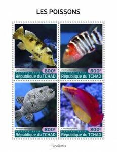 Chad 2020  fauna  fishes   S202010