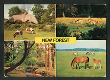 Posted C1980s Multiviews of the New Forest: Deer: Ponies: Brook