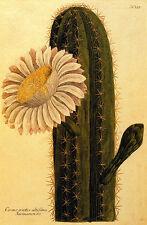 Cactus Flower 22x30 Hand Numbered Edition Botanical Garden Art Print