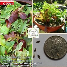 "100 LETTUCE ""MIXED LEAVES"" SEEDS(Lactuca sativa);Delicious blend of salad leaves"