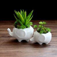 2x Cute Elephant Flower Planter Flowerpot Succulent Plant Pot Home Garden Decor
