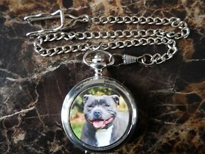 STAFORDSHIRE BULL TERRIER CHROME POCKET WATCH WITH CHAIN (NEW)