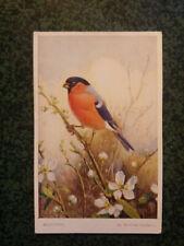 BOUVREUIL BULLFINCH  illustration WINIFRED AUSTEN  carte postale postcard