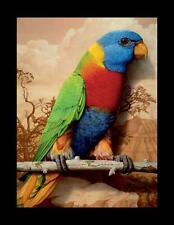 RAINBOW PARROT LITHOGRAPH BY TOM PALMORE 1989 PHOTOREALIST ARTIST SIGNED LIMITED