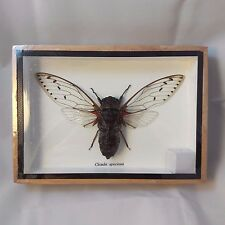 Real Rare Insects Bugs Collections in Wood Frame Collectible Gift Thai
