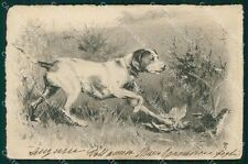 Hunting dog P F postcard cartolina QT5948