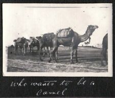 VINTAGE PHOTOGRAPH 1913 CIRCUS ANIMALS CAMELS CARAVAN PACKS AUSTRALIA OLD PHOTO