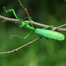 True to Nature Insect Ornament Fridge Magnet Outdoor Patio Mini Mantis