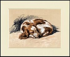 WELSH SPRINGER SPANIEL CURLED UP SLEEPING GREAT DOG PRINT MOUNTED READY TO FRAME