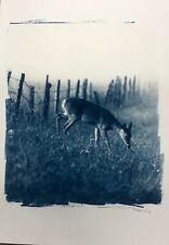Photography pictures blue and white cyanotype 30.5x21.5 limited edition 1 of 10