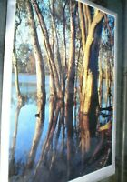 1 LARGE POSTER  65 X 50 CM APPROX RIVER RED GUMS MURRAY BASIN SYDNEY AUSTRALIA
