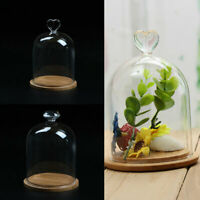 Glashaube Cloche Glas Haube Glasdom Glaskuppel Glassturz Glasglocke + Holz Base
