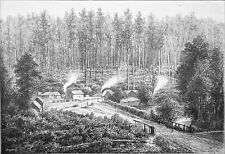 AUSTRALIA - FOREST near FERNSHAWE at NORTHEAST of MELBOURNE -Engraving 19th