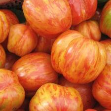 POMODORO TIGERELLA 30 SEMI pomodori a grappolo, ideale salse, taglia media