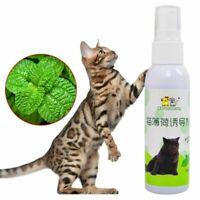 Cat Catnip Pet Training Toy Natural Healthy Cat Mint Scratch Toy Spray Funn X9W2