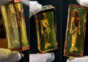 1/12 scale mermaid in formalin jar. siren nixie taxidermy undine dead skeleton