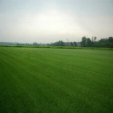 Double Eagle Centipede Grass Seed 1 Lb - 2000 Sq.ft Coverage