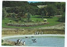 Colour Postcard of Penguin Pool, Cotswold Wild Life Park, Burford
