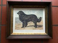 Newfoundland Book of the Dog Chromolithograph Cassell London 1881 Period Frame